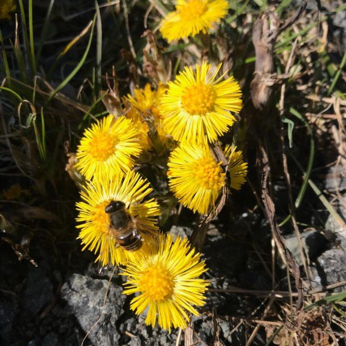 Steinerskoleforbundet inviterer til å bli en bievenn